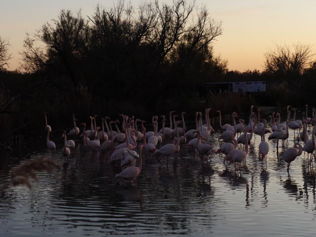 Panorama_Flamingos_1