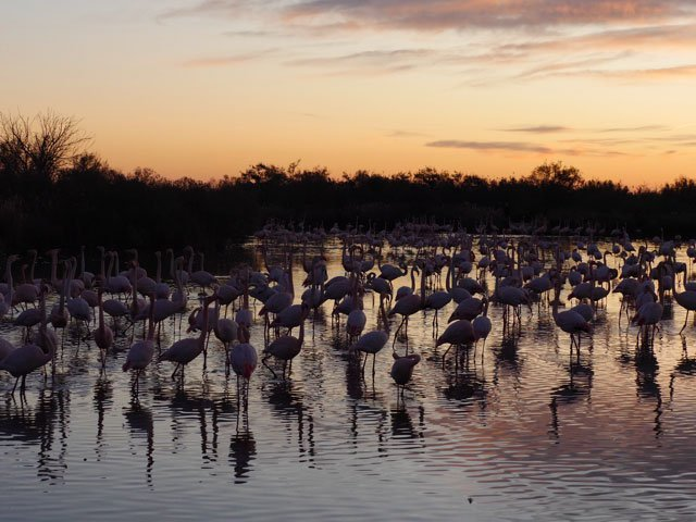 Panorama_Flamingos_2