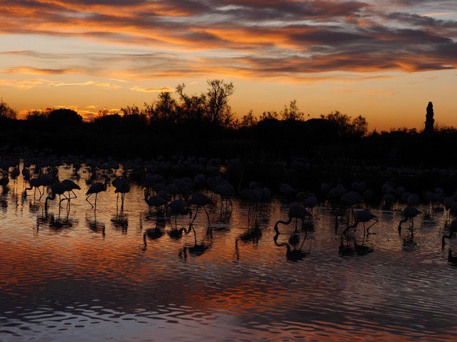 Panorama_Flamingos_4