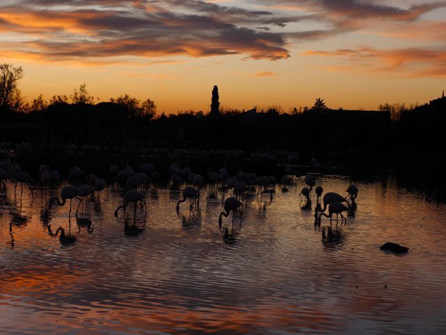 Panorama_Flamingos_5